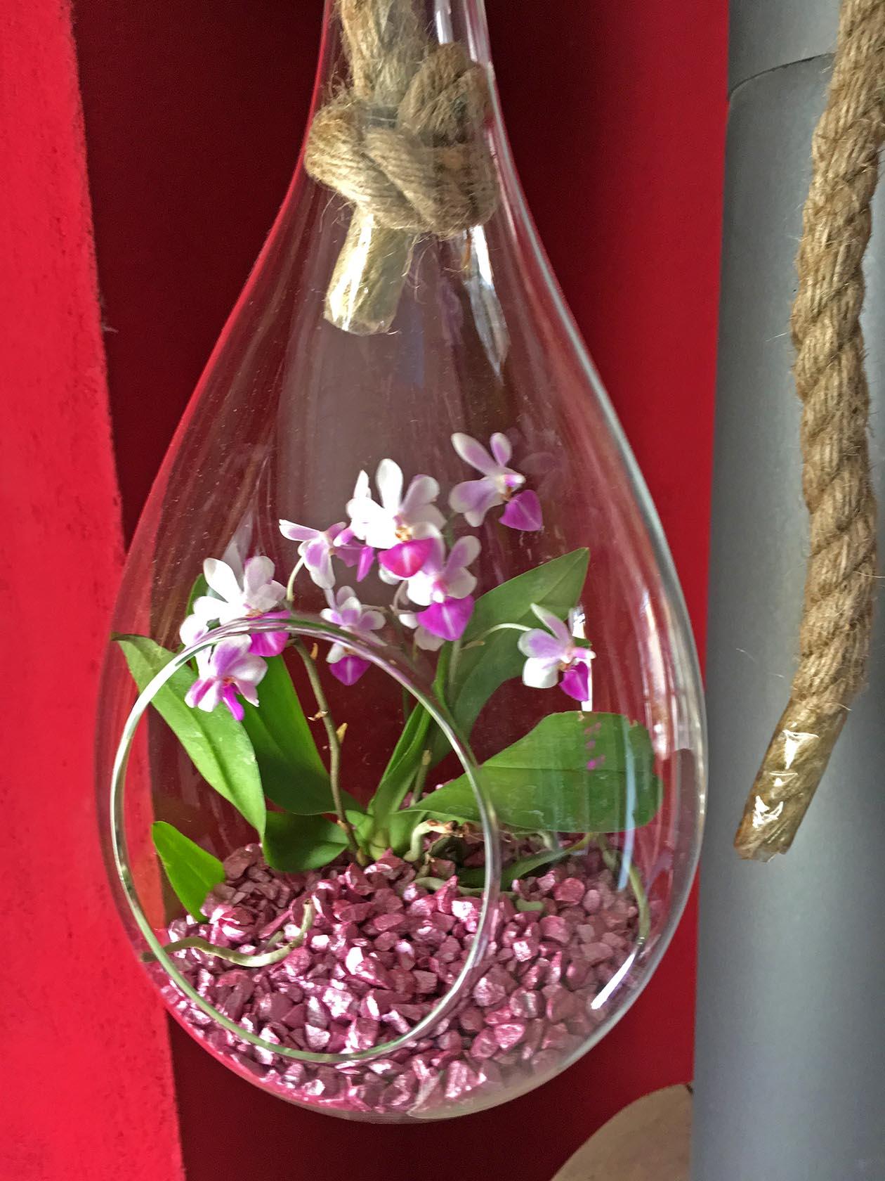 ... Vorschau: Colomi Orchideengranulat Gestaltungsidee ...