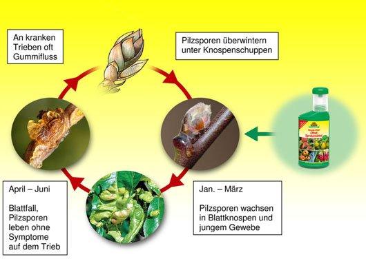 Schaubild-Neudo-Vital-Obst-Spritzmittel