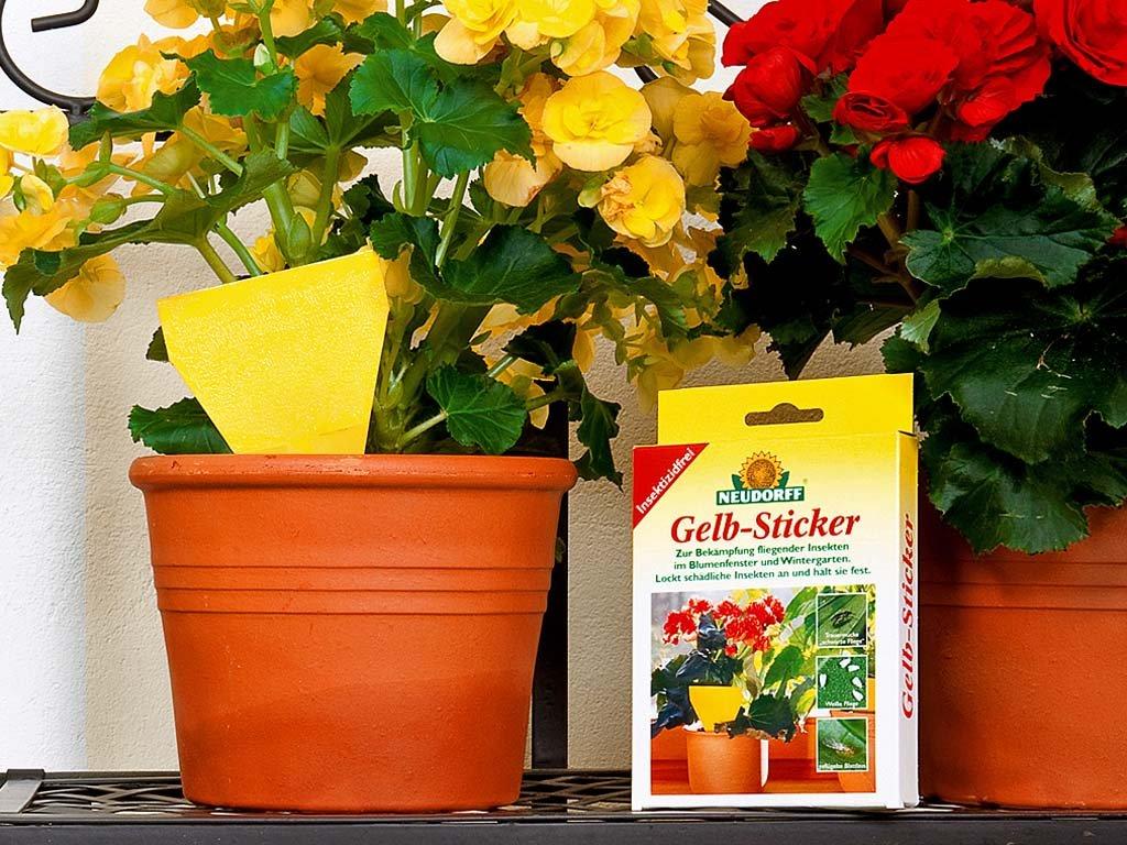 Neudorff gelb sticker biologisches pflanzenschutzmittel for Gelbsticker neudorff