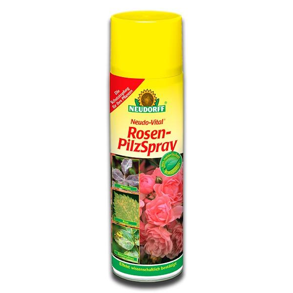 mehltau rosen hausmittel rosenbl tter rollen sich ein was tun ratgeber sternru tau echter. Black Bedroom Furniture Sets. Home Design Ideas